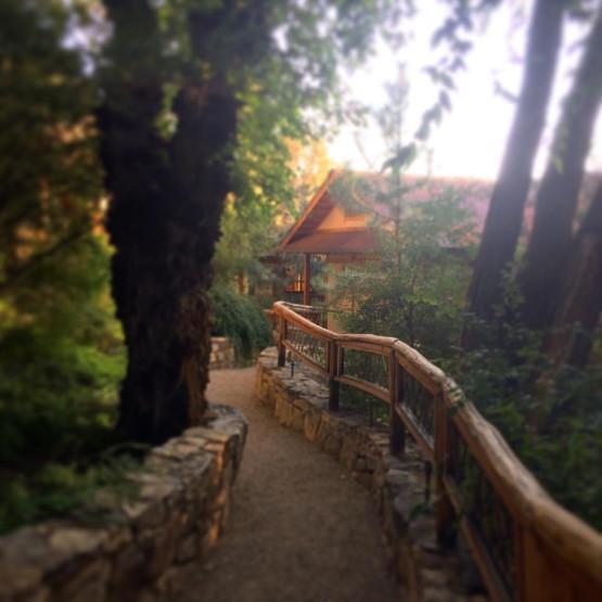misty pagodas